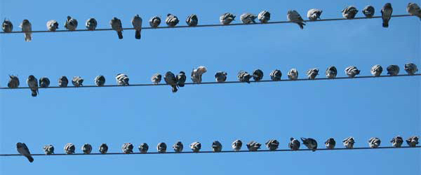 """""""Birds on the Wire"""""""