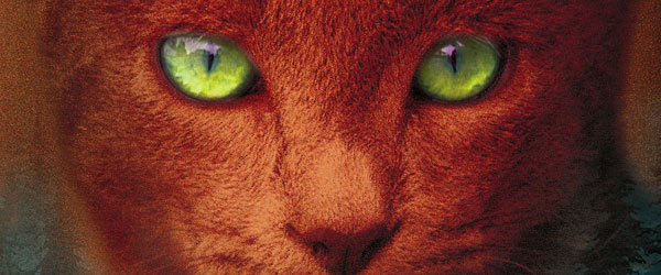 """O Apelo da Floresta"" 