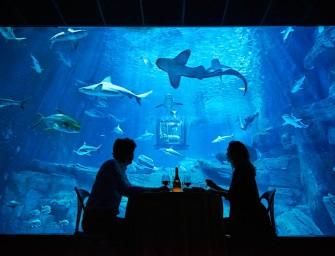 Uma noite entre tubarões