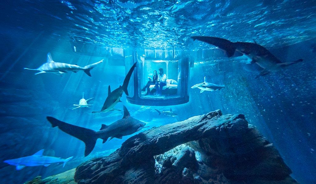 Airbnb - Uma noite entre tubarões