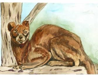 Equipas recebem o nome de espécies animais ameaçadas de extinção